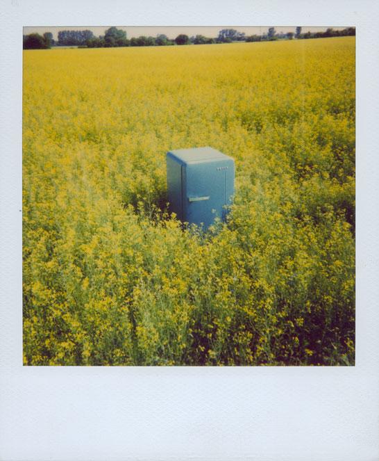 blue fridge in yellow rape